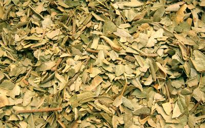 Boldo en hojas trituradas