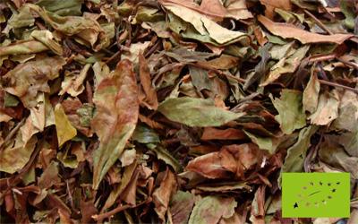 Té blanco Pai Mu Tan Bio de cultivo ecológico